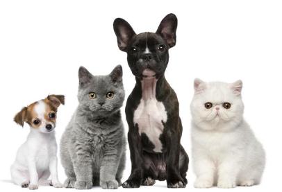 Zwierzęta w wynajmowanym mieszkaniu